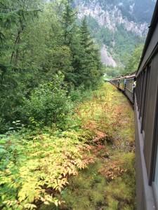 White Train pass